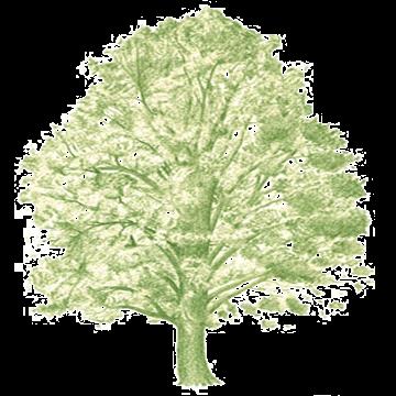 Projekt Arboretum